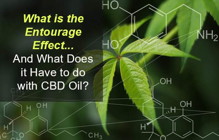 What is the Entourage Effect… And What Does it Have to Do with CBD Oil?